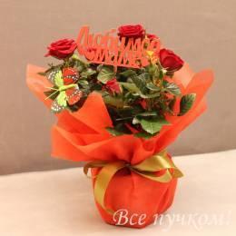 Кустовая роза в подарочном оформлении