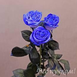 """Роза синяя """"Ванделла"""""""