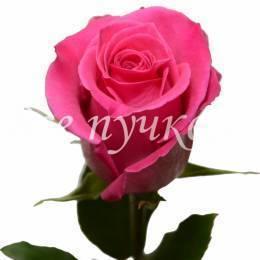 Розовые розы 60 см. Оттенок в ассортименте