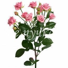Кустовая роза. Цвет МИКС