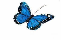 Бабочка в ассортименте