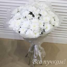 Букет#803 - 9 кустовых хризантем