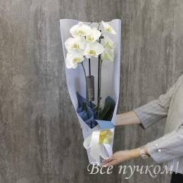 """Орхидея """"Фаленопсиc"""" в оформлении"""