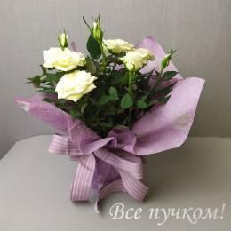 Кустовая роза в горшке  в оформлении. Цвет в ассортименте