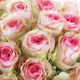 Роза 60-70 см  сорт Эсперанс