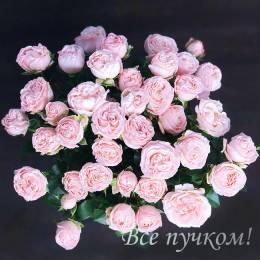 Сортовая кустовая роза. Цвет яркий или нежные оттенки.Сорт в ассортименте- 1 шт