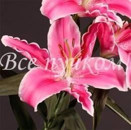 Лилия розовая в ассортименте