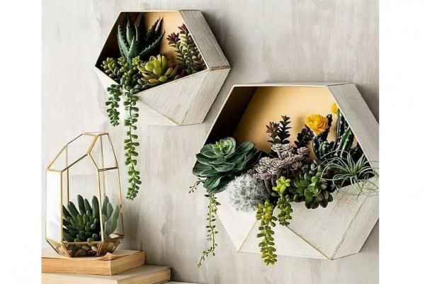 6 мая ОТКРЫТИЕ единственного специализированного салона комнатных растений