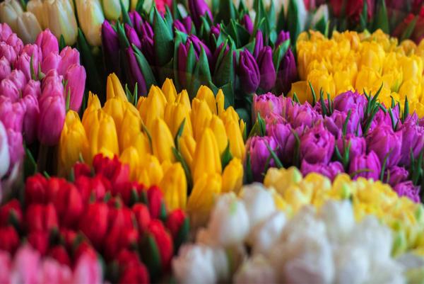 Время тюльпанов!!!