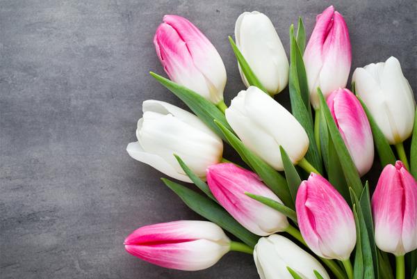 И снова тюльпаны!